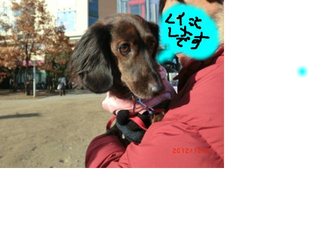 snap_gohome833_20121201848.jpg