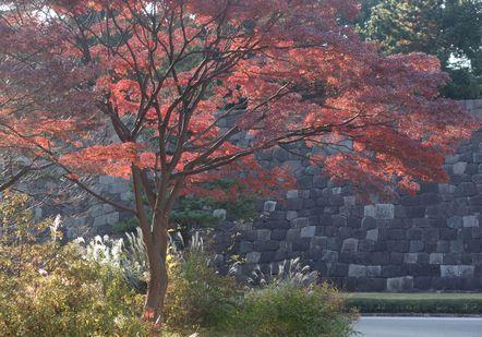 石垣と紅葉の組み合わせ