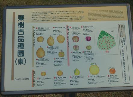 果樹古品種園