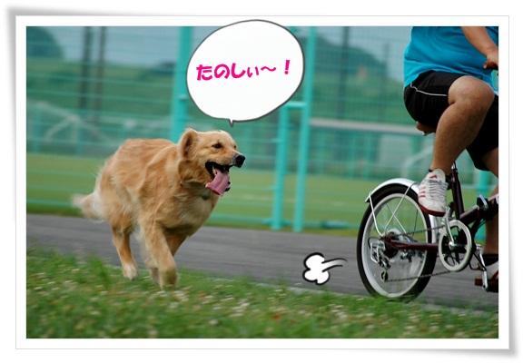 自転車と走る
