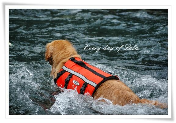 川で泳ぐ2