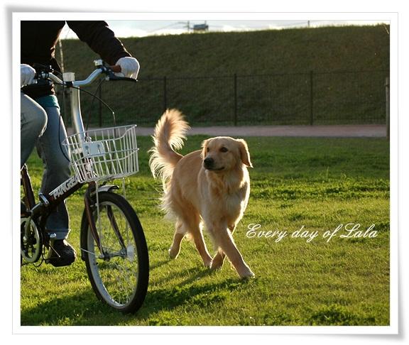 自転車とララ