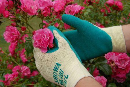showa_garden_glove_with_roseekm450x300ekm.jpg