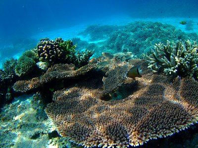 世界自然遺産のサンゴ礁