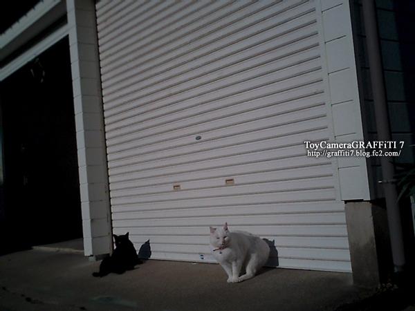 toycamera:ネコ