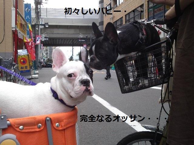 04_ぽん07.23