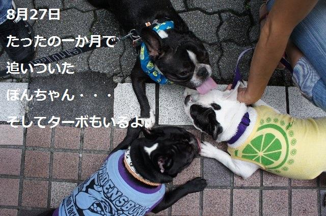 05_ぽん08.27