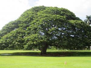 ハワイ+043_convert_20111115230417