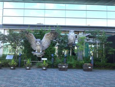 釧路空港 シマフクロウ