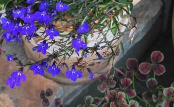 森庵玄関の青と茶