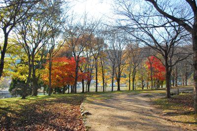 まほろば 並木道の紅葉