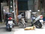 雙連街魯肉飯の犬