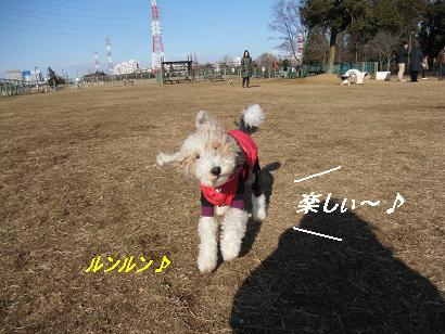 CIMG3146-8.jpg
