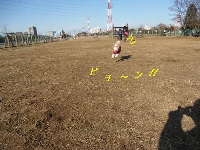 CIMG3151-9.jpg