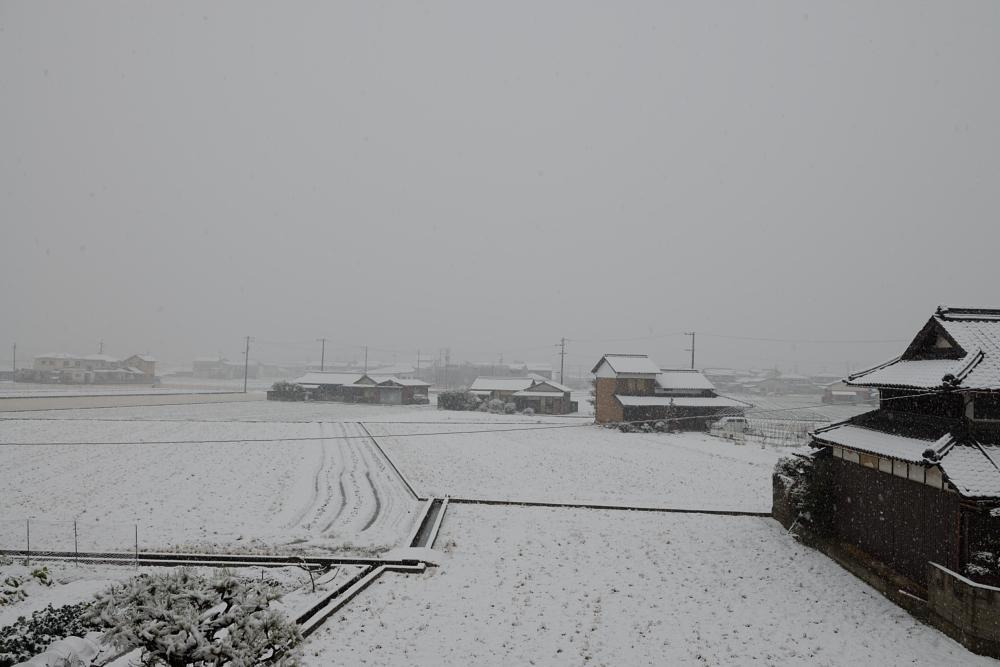 雪が振りました003