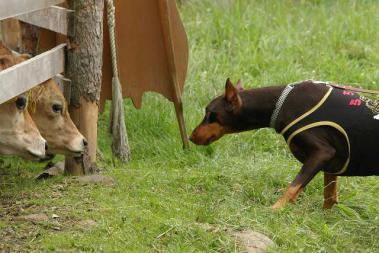 牛とララちゃん