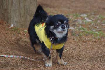 通りかかった犬を見るポコ