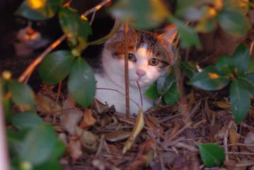 茂みの中の猫ちゃん2ひき