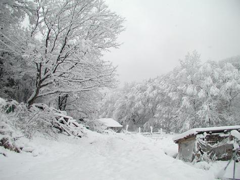 2011_11_18
