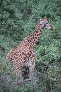201108kenya - 20111102011