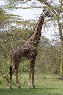 201108kenya - 20111104017