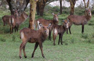 201108kenya - 20111110015