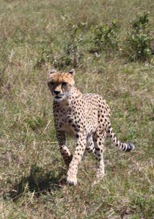 201108kenya - 20111202014