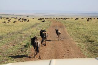 201108kenya - 20111202009