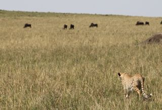 201108kenya - 20111202016