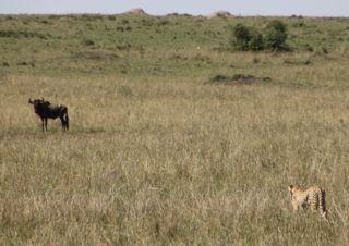 201108kenya - 20111202017