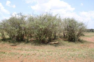 201108kenya - 20111204009