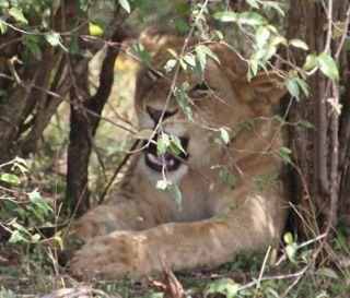 201108kenya - 20111204016