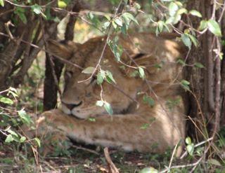 201108kenya - 20111204017
