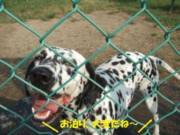 009_convert_20110821232726.jpg