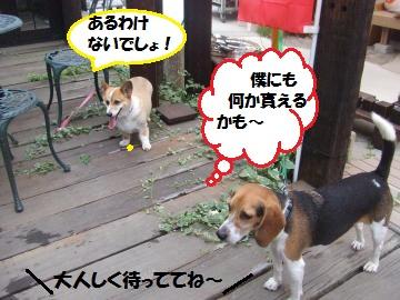 016_convert_20110817231850.jpg