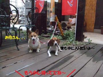 016_convert_20110823000200.jpg