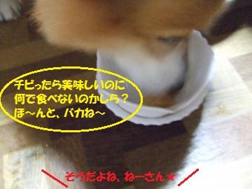 025_convert_20110820011547.jpg