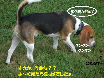 032_convert_20110823230751.jpg