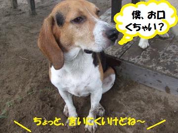 038_convert_20110830223806.jpg