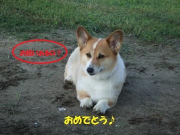 075_convert_20110828225055.jpg