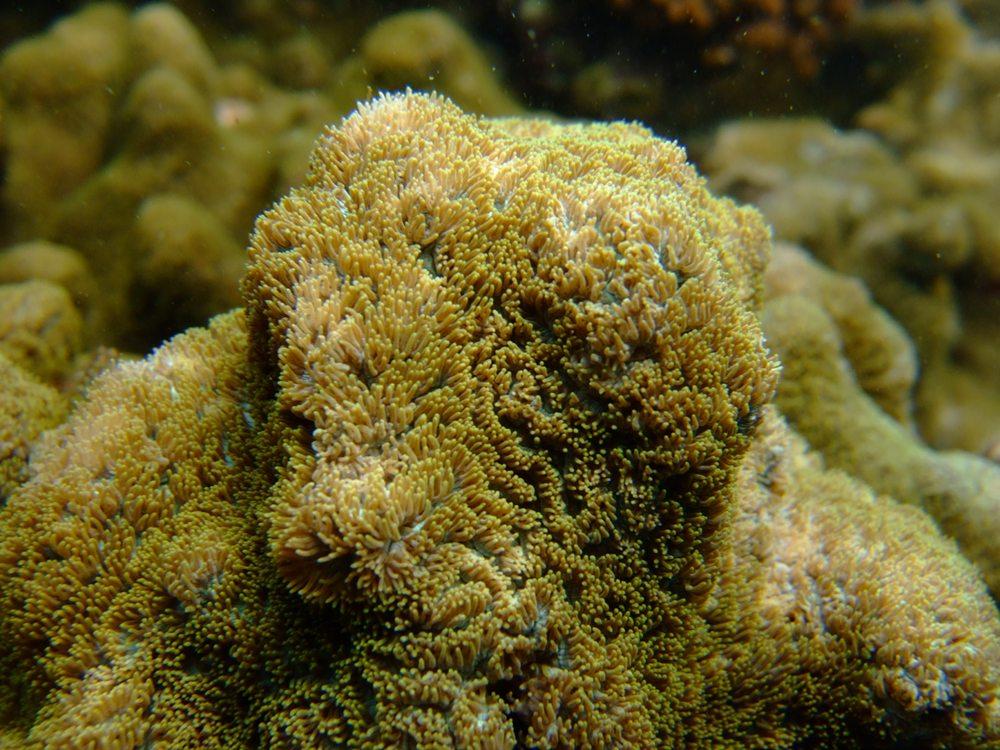 なんの サンゴだろ~??
