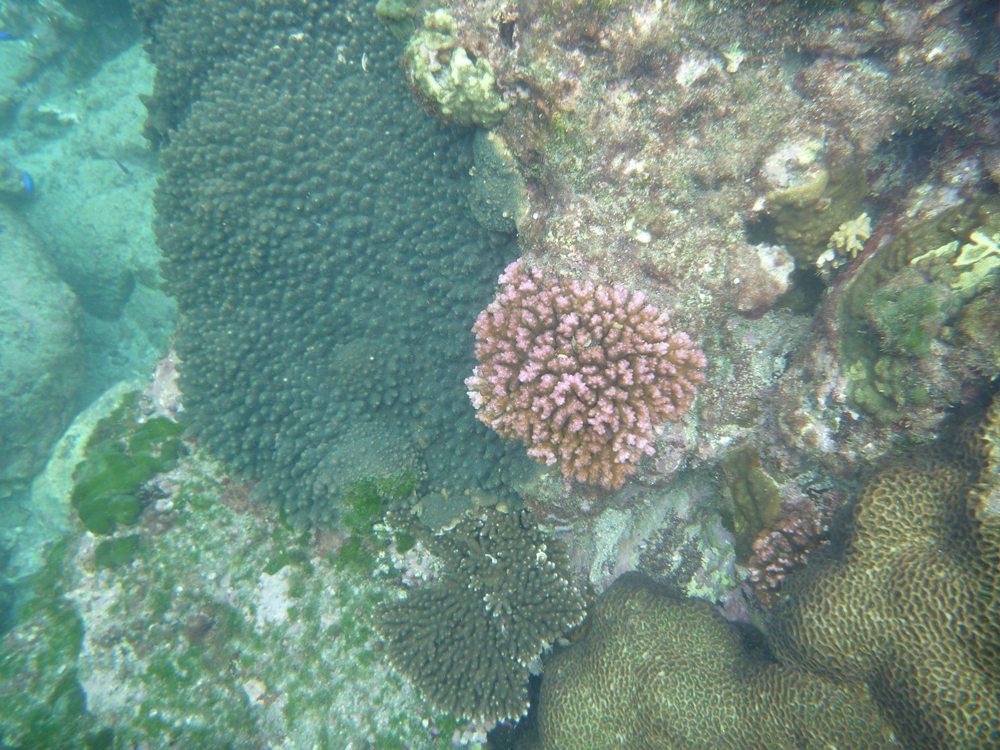 いろんな色の サンゴ♪