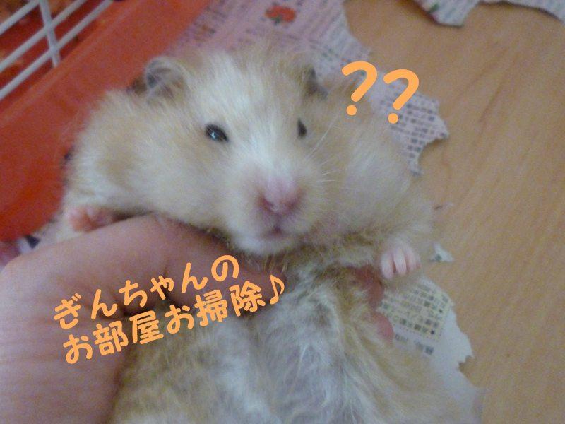 ぎんちゃん 抱っこ!