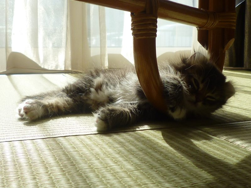 足ひっかけて 寝てる。。