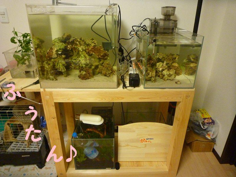 淡水水槽も 綺麗にタチアゲ~~!!!!