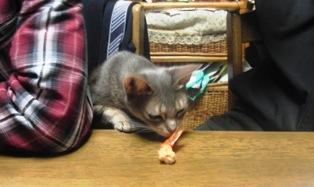 katt2.jpg