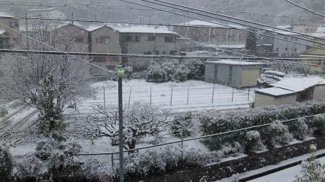 2013/1/14の雪(1)