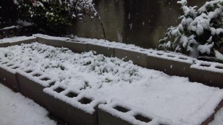 2013/1/14の雪(3)
