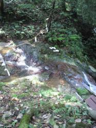 20110816山へ滝2