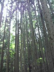 20110816山3